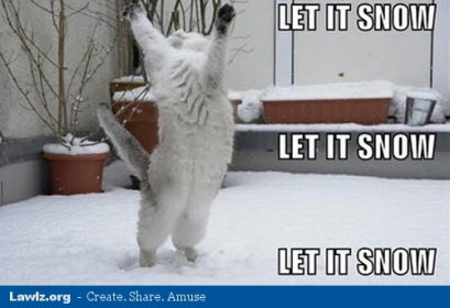 let-it-snow-winter-cat-meme