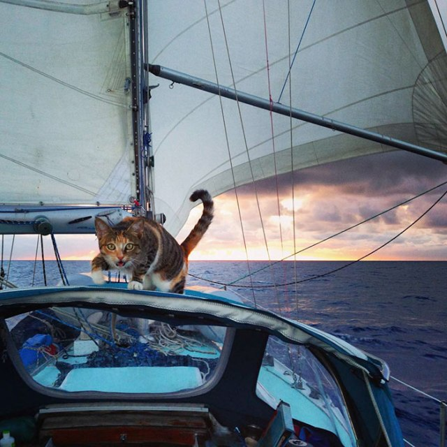 sailing-cat-travelling-world-liz-clark-14